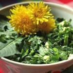 Салат из одуванчиков 1