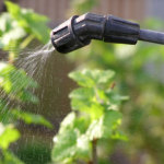 Опрыскивание растений в саду